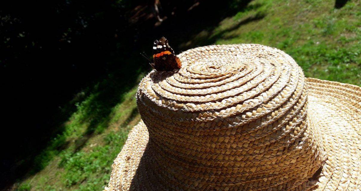 καπέλο πεταλούδα